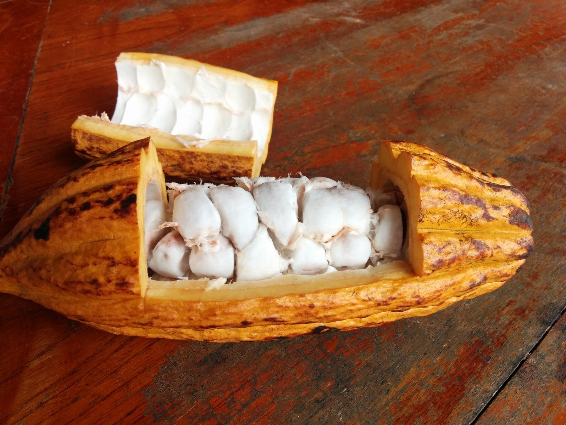 Cut open cacao pod